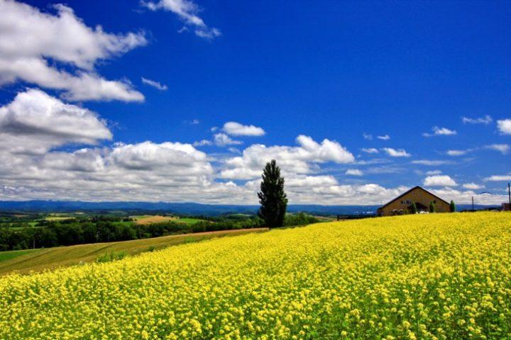 北海道を存分に楽しめる!人気の旅行・観光ガイドブックおすすめ6選